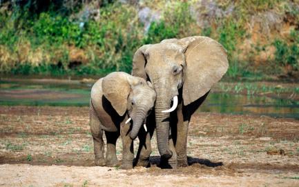 fond_ecran_elephants
