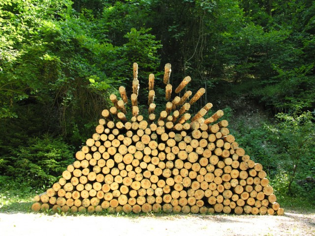 piled_forest-640x480
