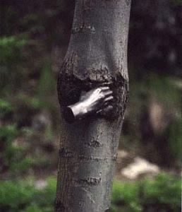 penone_main-arbre_2