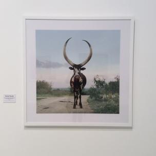 Daniel Naudé (Afrique du Sud), photographie et nature en péril..