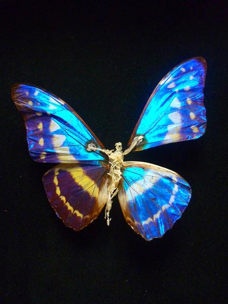 sombre_re_paration_papillon_de_Claire__medium