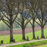 Sculpture écologique : 7000 chênes et des glands! § planter