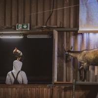 """Perspectives- un ensemble animal"" Judith Zagury / ShanjuLab"